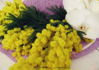 Gialla, pomposa e profumata: la Mimosa, il fiore della Donna